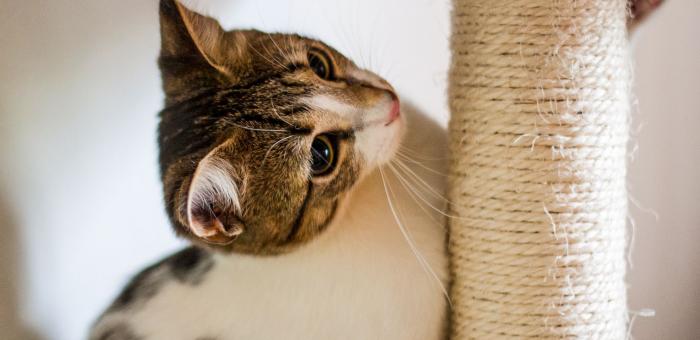 Tips Menjaga Kesehatan Kucing, dan Faktor Penting Lainnya